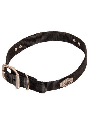 Concho Dog Collar