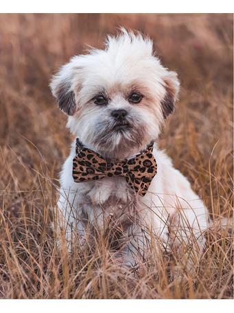 Cheetah Dog Collar with Bow