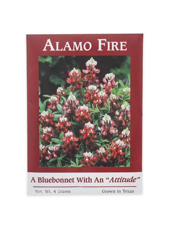 Maroon Alamo Fire Bluebonnet Seeds