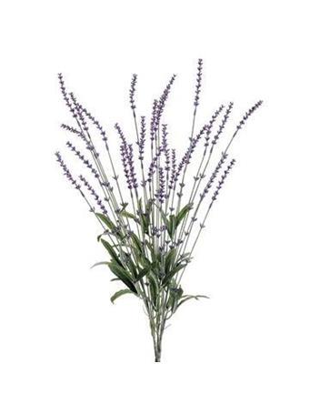 "23"" Lavender Bush LAVENDER"