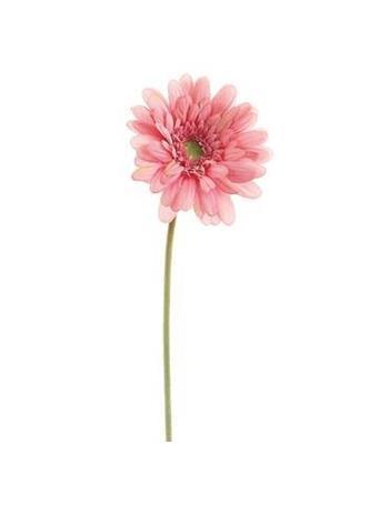 """21.5"""" Gerbera Daisy  No Color"""