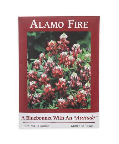 Maroon Alamo Fire Bluebonnet Seeds - Front Maroon