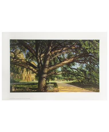 Benjamin Knox Century Tree Print